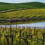 Wines with Designation of Origin Malaga
